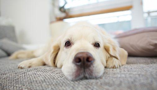 Entspannung für den Hund