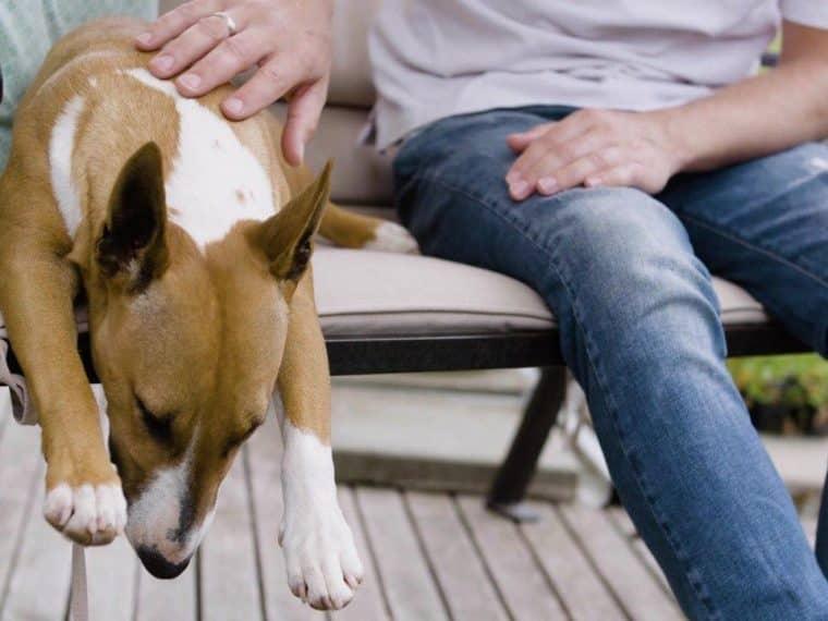 Listenhunde