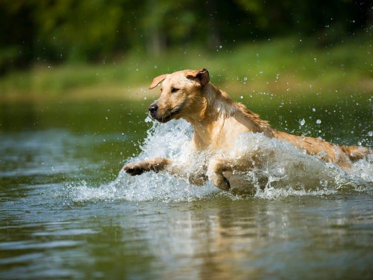 Wasserspaß für Hunde