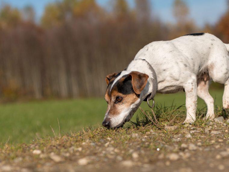 Artenschutzhunde