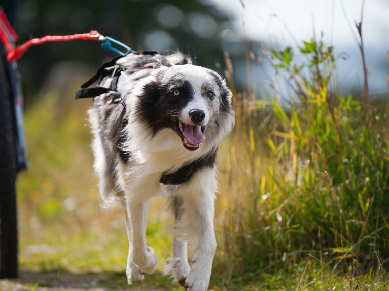 Dogscooting
