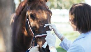 Homöopathische Notfallapotheke für Pferde