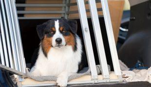 Hund an die Hundebox gewöhnen