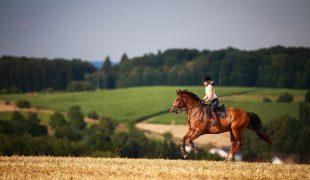 Ausdauertraining für Distanzpferde