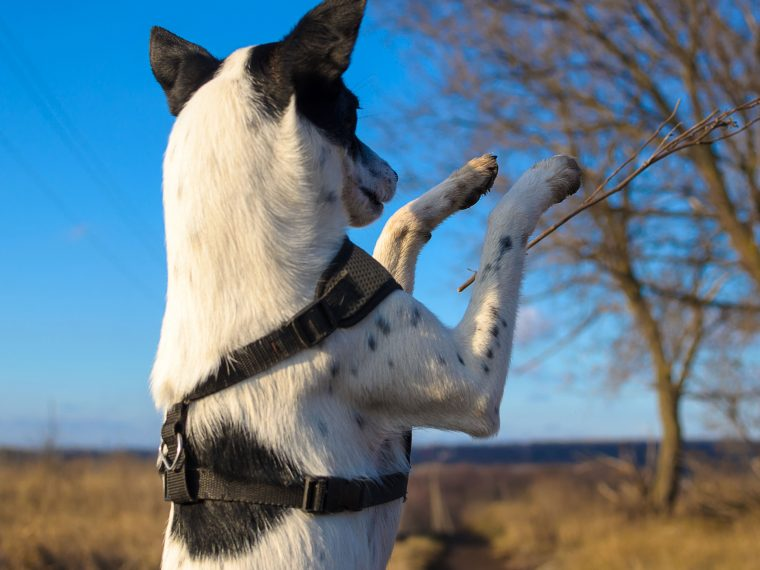 Feinmotoriktraining für den Hund