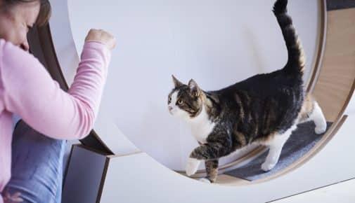 Katzenlaufräder