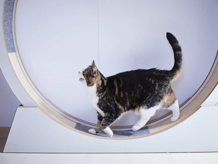 Katzenlaufräder für Wohnungskatzen