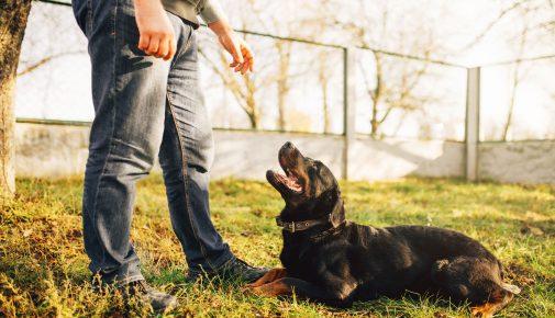 Missverständnisse beim Hundetraining