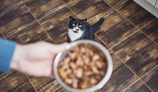 Ernährungstipps für Katzen