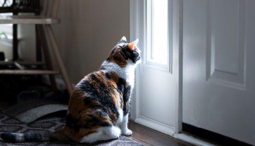 Katze allein zuhause