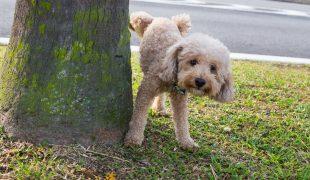 Harnwegserkrankungen bei Hunden