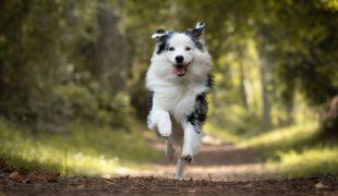 Hundegedächtnis