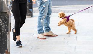 Impulskontrolle bei Hunden