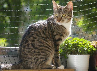 Katzenbalkon