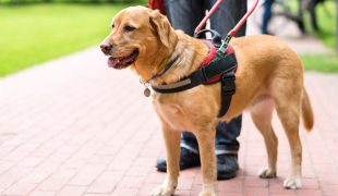 Mobilitätsassistenzhund