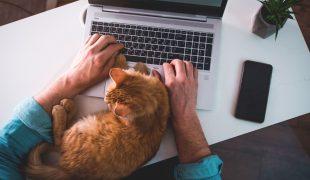Haustier-Boom in der Coronakrise