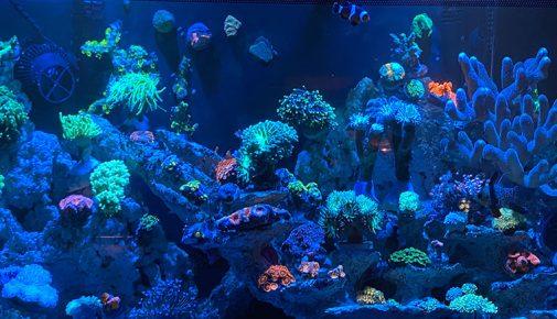 Meerwasseraquarium planen