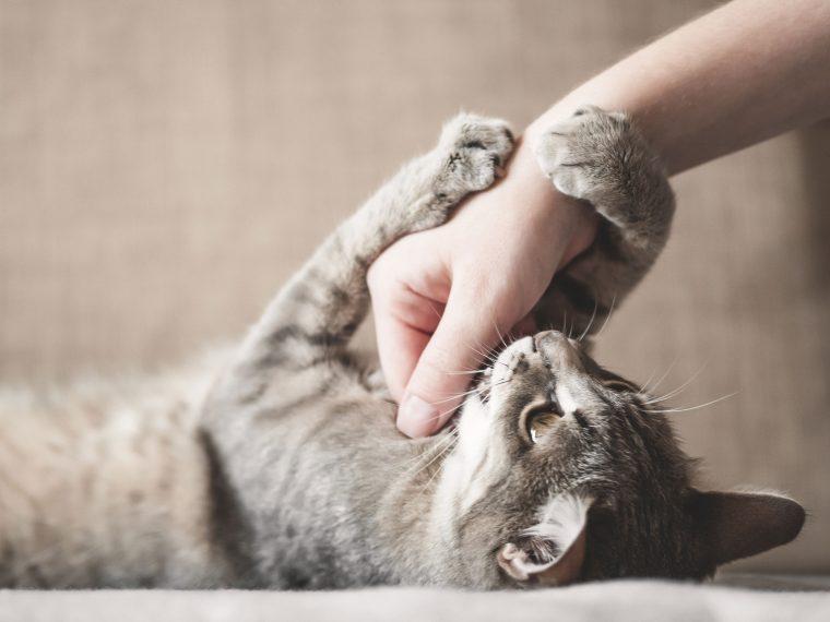 Spielaggression bei Katzen