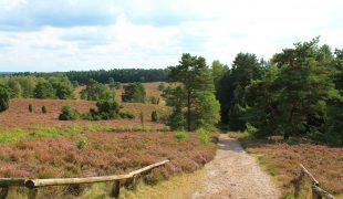 Heidschnuckenweg in der Lüneburger Heide