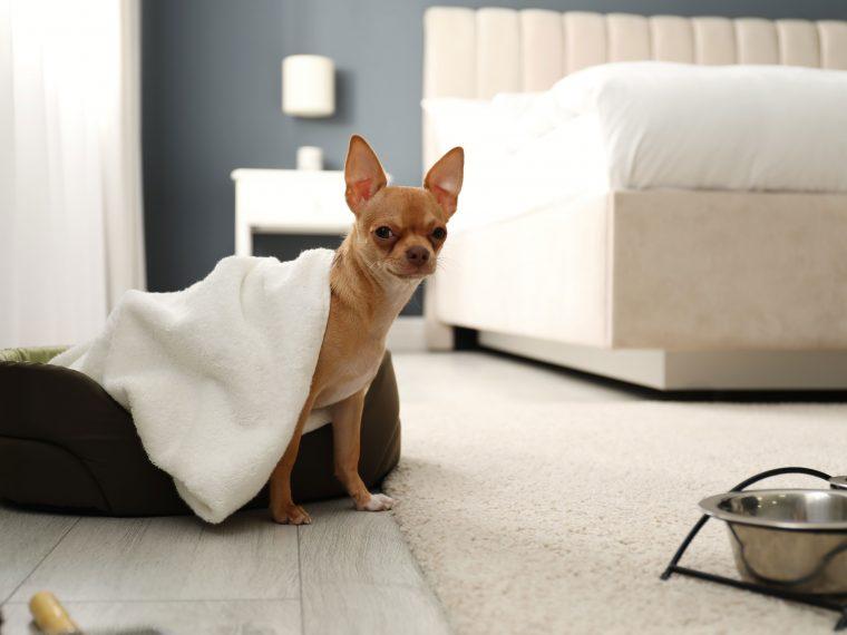Hundehotel der Extraklasse