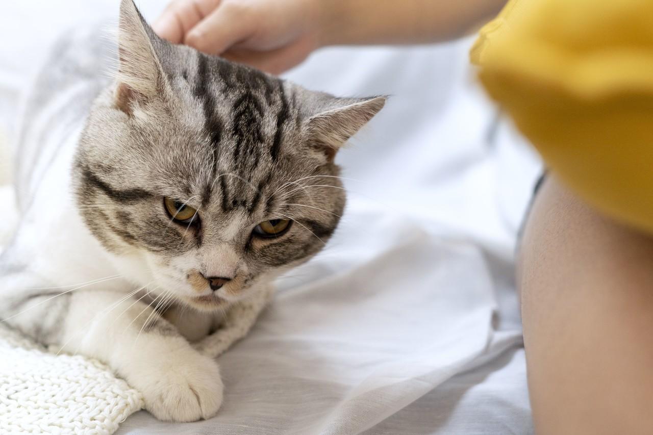 Was Katzen nervt