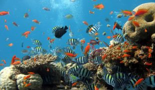 Aquarienreinigung