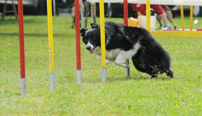 die-beliebtesten-hundesportarten