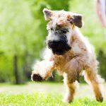 Hundeerziehung im Freien - so geht's