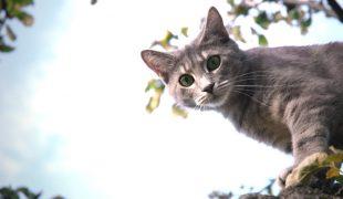 Kastration bei Katzen