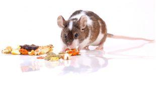 Leckerlis für Kleintiere selber machen