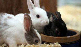 Trinkgefäße für Kleintiere
