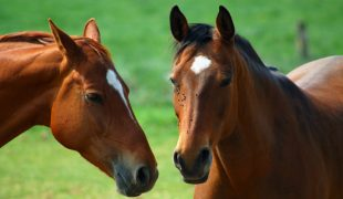 Ungezieferschutz für Pferde & worauf Sie achten sollten