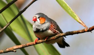 Vogelhaltung in Außenvoliere
