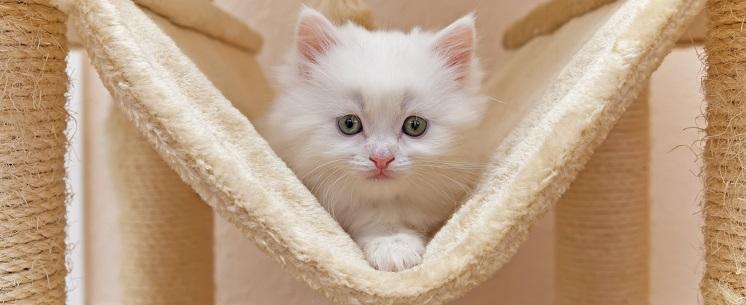 UrineOff Geruchs- und Fleckenentferner für Katzenurin
