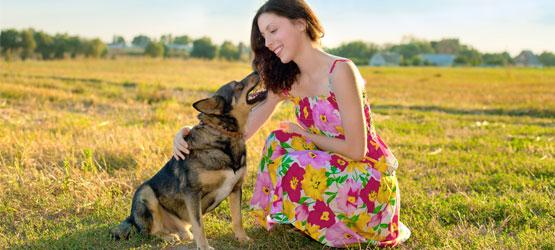 Gesunde Auswahl Speckstreifen Hund Leckereien