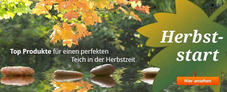 Herbststart: Top Produkte für einen perfekten Teich in der Herbstzeit