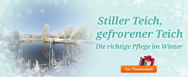Stiller Teich, gefrorener Teich... Die richtige Pflege im Winter - unsere Tipps!