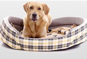 b381ec74a3223a Hundezubehör & Hundebedarf günstig im Hundeshop | ZooRoyal