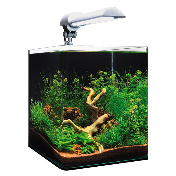 dennerle nanocube 20l aquarium. Black Bedroom Furniture Sets. Home Design Ideas