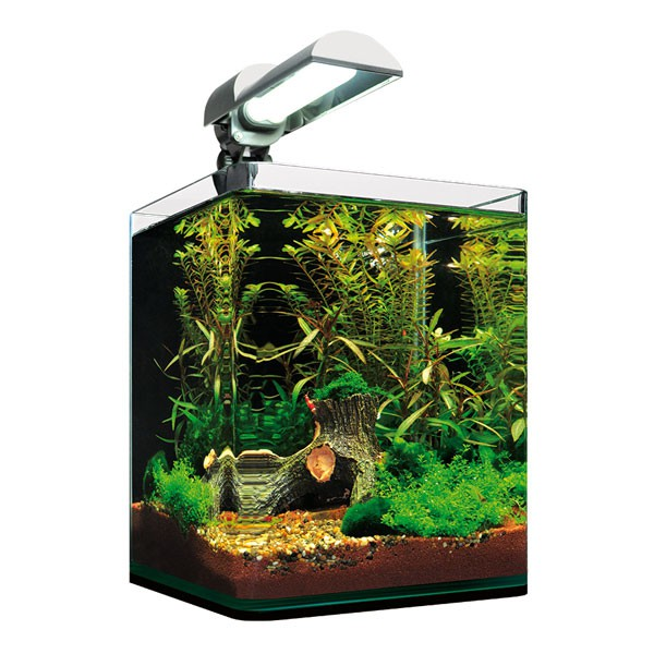 dennerle nanocube 10l aquarium. Black Bedroom Furniture Sets. Home Design Ideas
