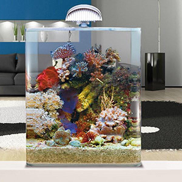 dennerle nano cube complete plus aquarium nano aquarium. Black Bedroom Furniture Sets. Home Design Ideas